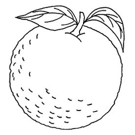 citrus orange embroidery pattern