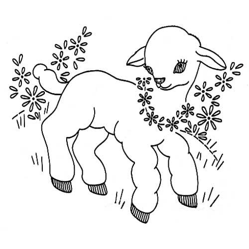 lamb and daisies